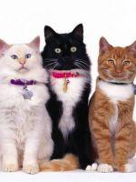 Как сделать ошейник для кошки своими руками